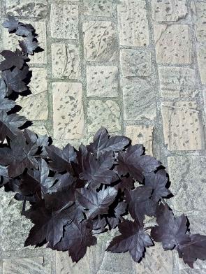 Come-foglie-al-vento-