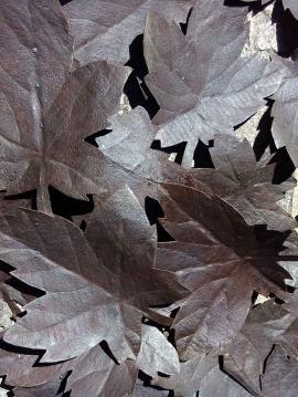 Come-foglie-al-vento1-